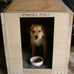pongos place